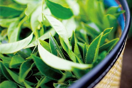 璽龍經典系列-有機綠茶 50g
