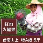 台南【有機紅肉火龍果】特A級6斤